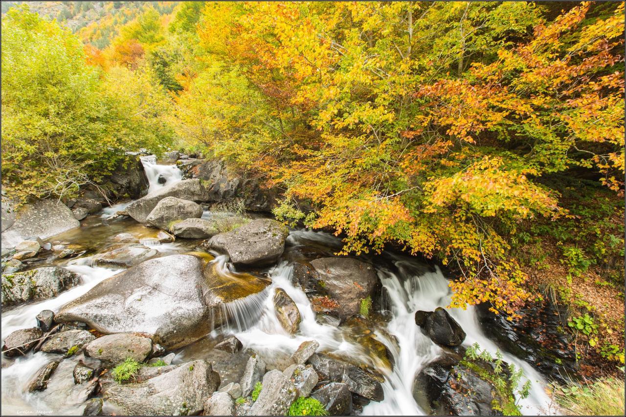 Neste de Couplan en habits d'automne