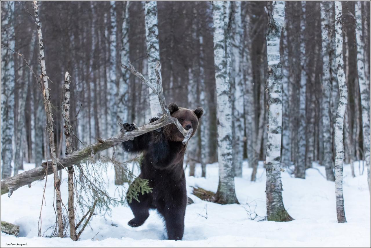 Petit Ours joue de la flûte.
