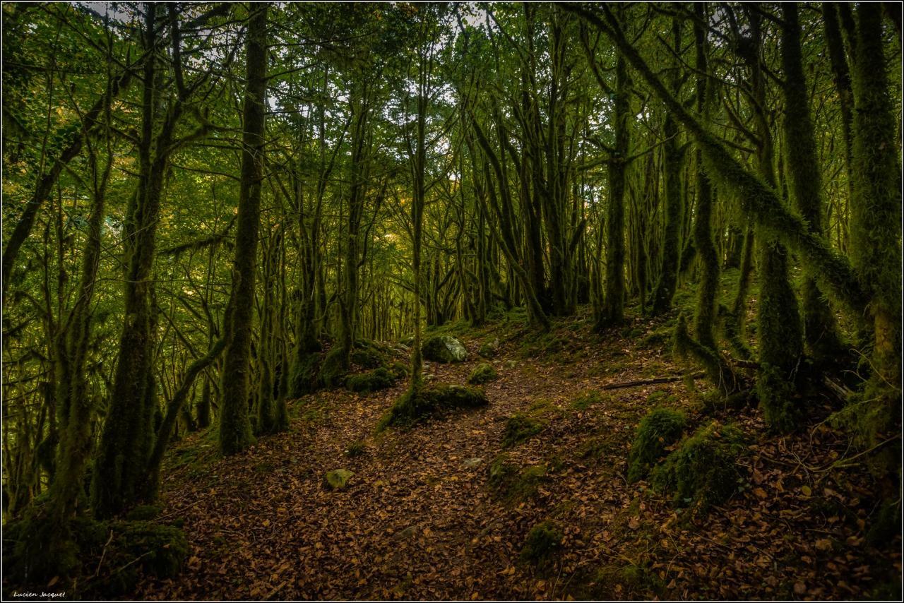Mytérieuse forêt
