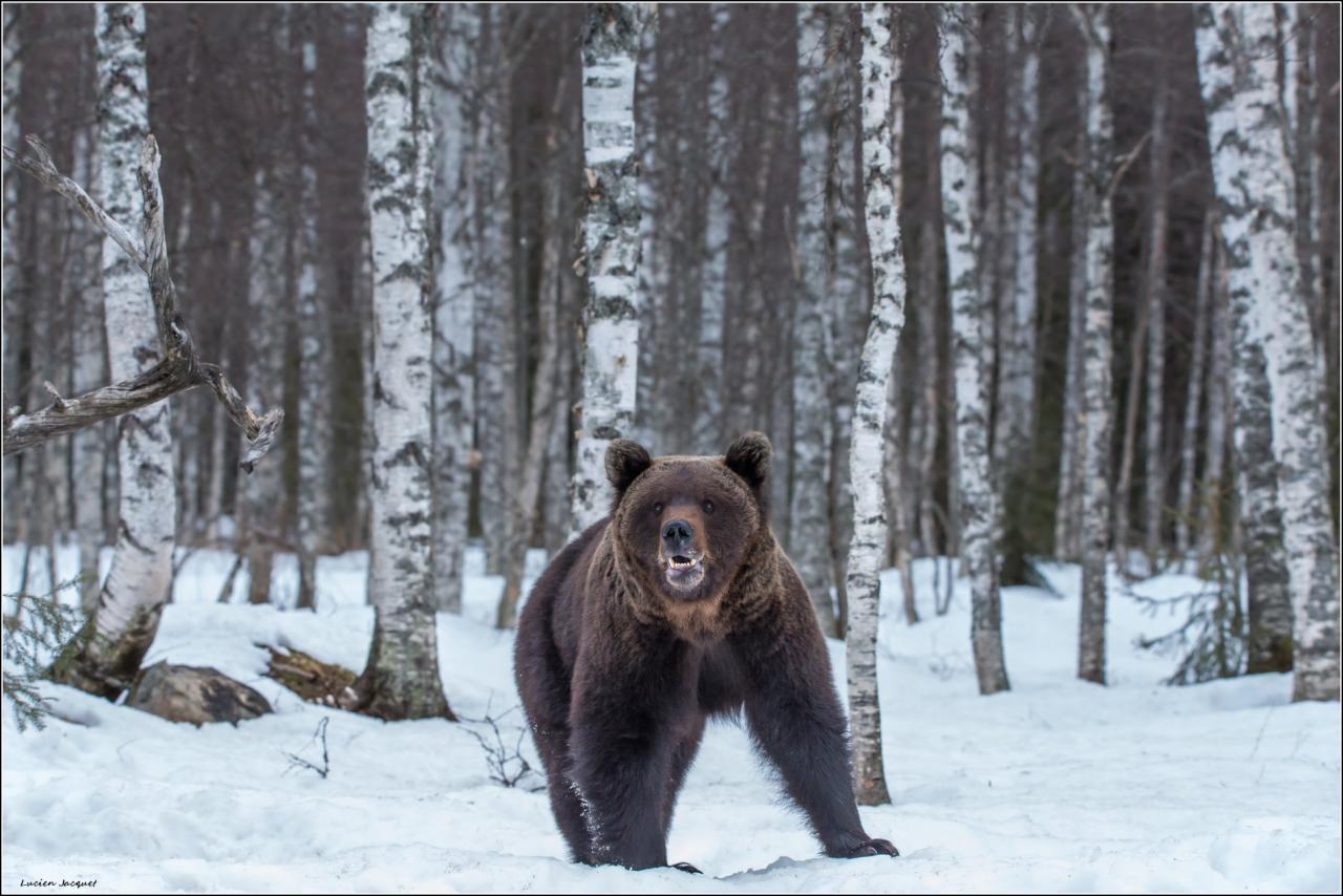 Le sourire de petit ours brun.