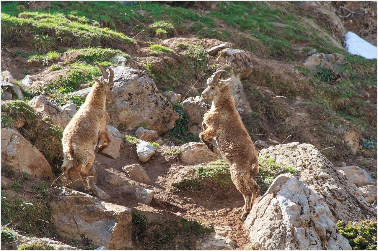 Simulacre de combat entre deux jeunes.