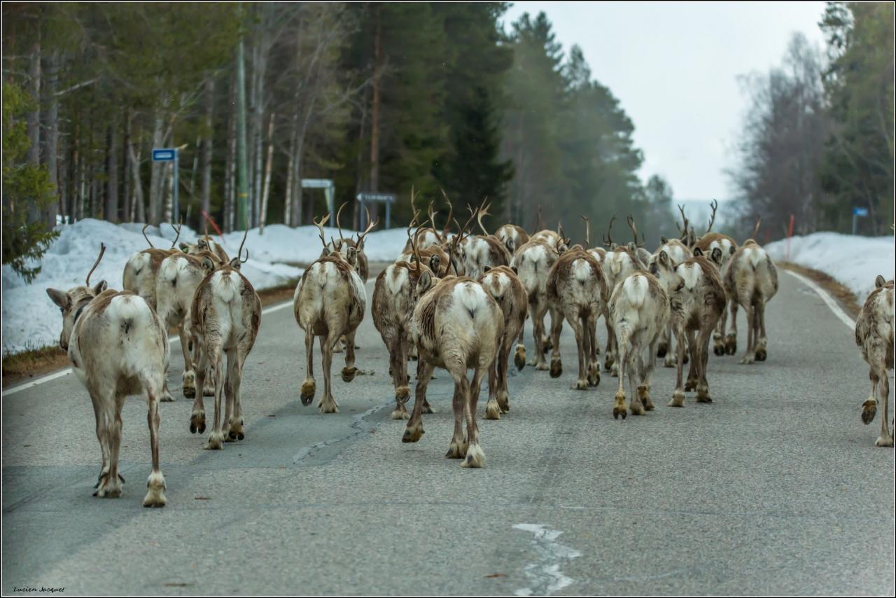 Embouteillage Lapon