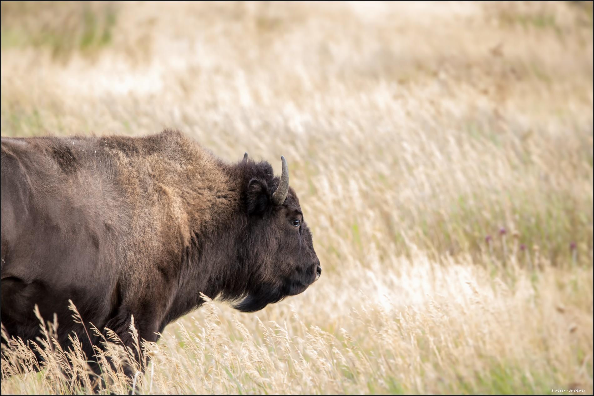 Madame bison vous dit bonsoir !