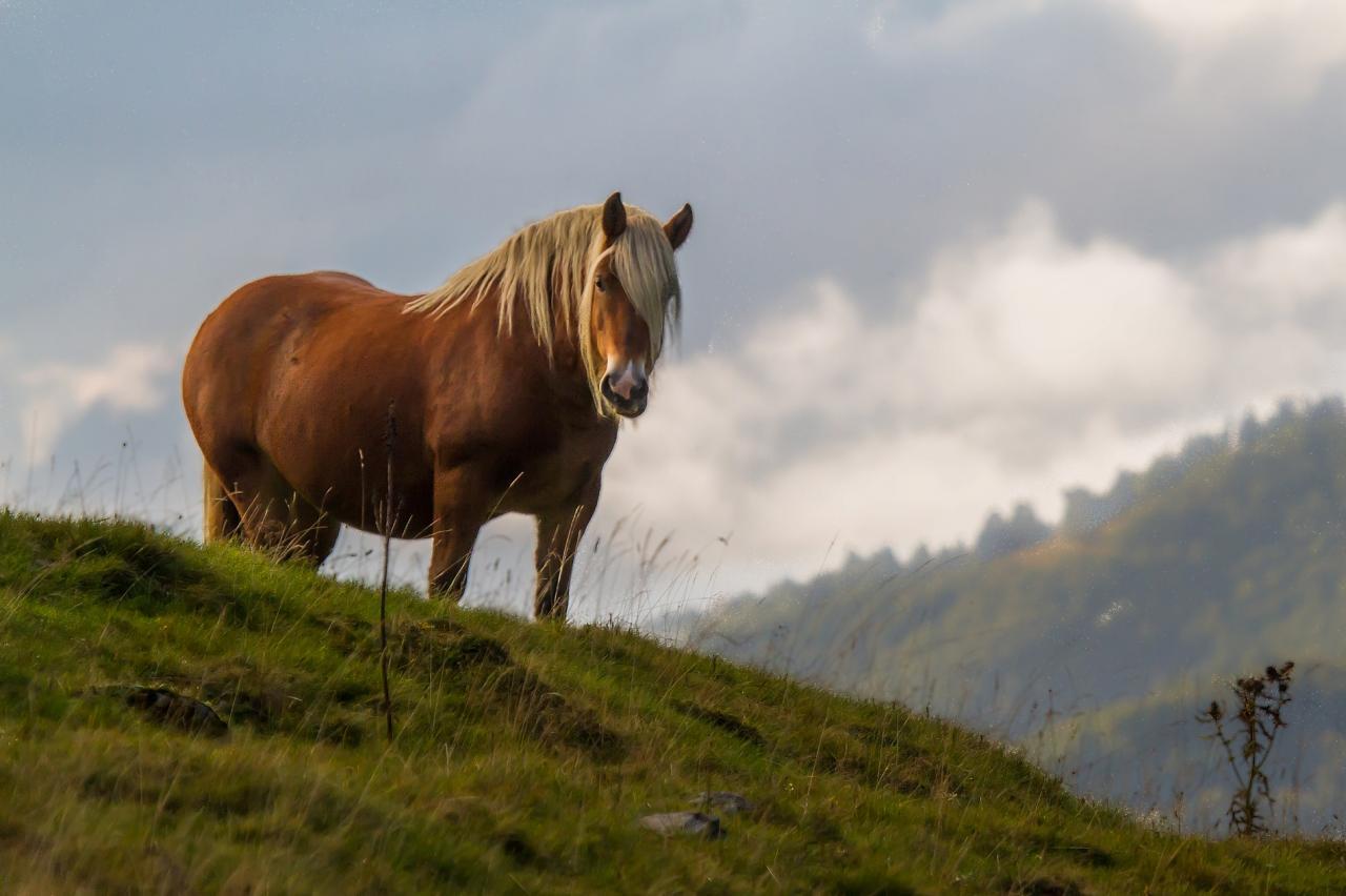 Cheval Pyrénées
